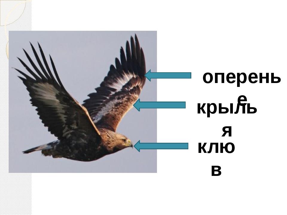 крылья оперенье клюв