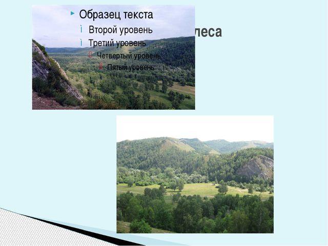Горы и леса