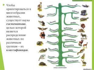 Чтобы ориентироваться в многообразии животных, существует наука систематика,