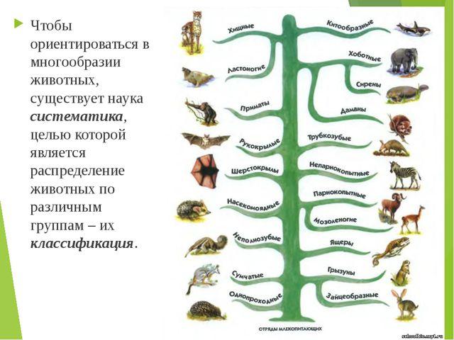 Чтобы ориентироваться в многообразии животных, существует наука систематика,...