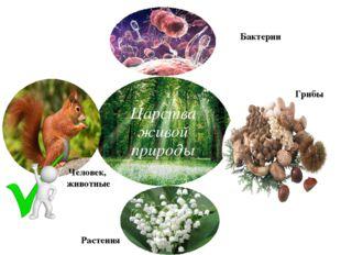 Человек, животные Бактерии Грибы Растения