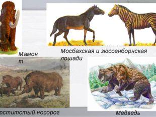 Медведь Денингера Шерститстый носорог Мосбахская и зюссенборнская лошади Мам