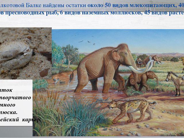 В Колкотовой Балке найдены остатки около 50 видов млекопитающих, 40 видов пре...