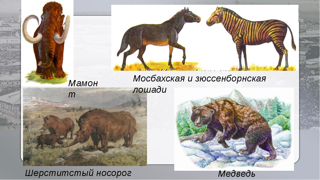 Медведь Денингера Шерститстый носорог Мосбахская и зюссенборнская лошади Мам...