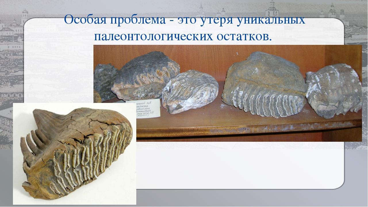 Особая проблема - это утеря уникальных палеонтологических остатков.