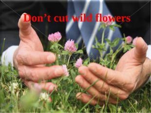 Don't cut wild flowers