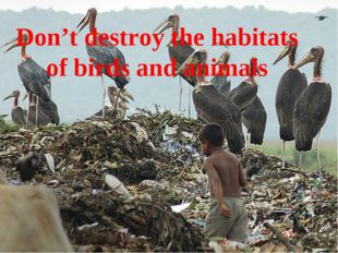 Don't destroy the habitats of birds and animals