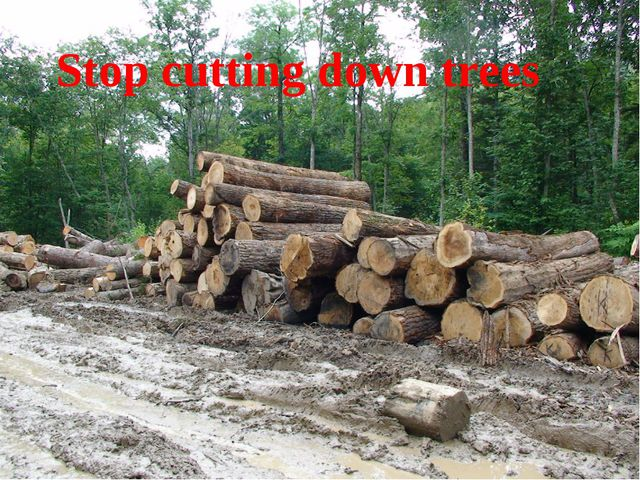 Stop cutting down trees