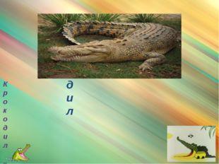 крокодил Крокодил – родственник аллигатора, но их легко отличить друг от дру
