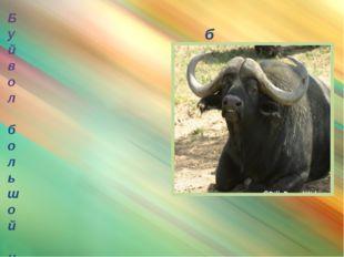 буйвол Буйвол большой и чёрный – как паровоз. И так же пыхтит, когда сердитс