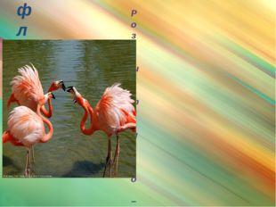 фламинго Розовый фламинго – очень красивая и элегантная птица. В высоту она д