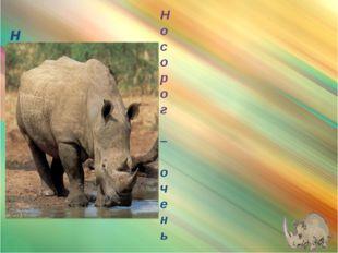 носорог Носорог – очень ловок и может нестись галопом так же быстро, как лош