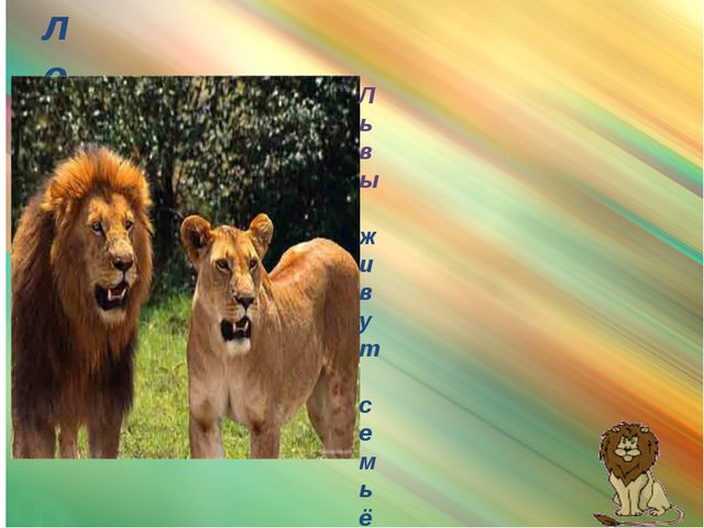 лев Львы живут семьёй и охотятся тоже всей семьёй. Самец с роскошной гривой,...