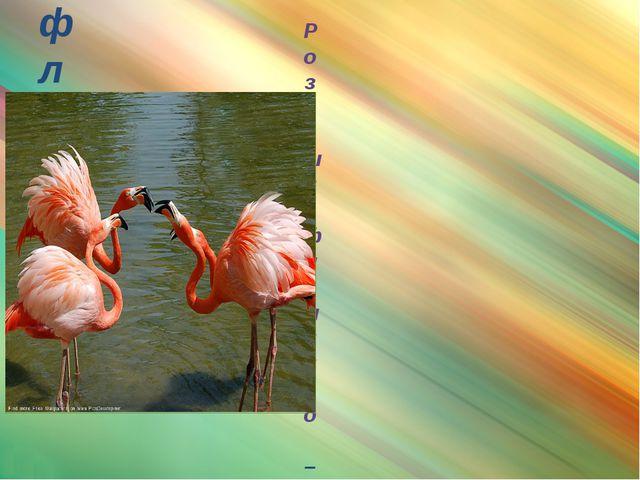 фламинго Розовый фламинго – очень красивая и элегантная птица. В высоту она д...