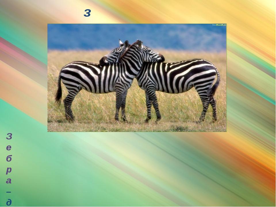зебра Зебра – дикая лошадка, полосатая, как сторожевая будка, как пограничный...
