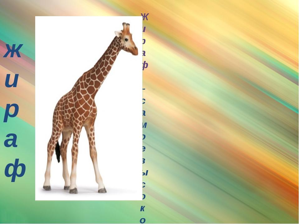 жираф Жираф – самое высокое животное на земле. Высота его почти шесть метров...