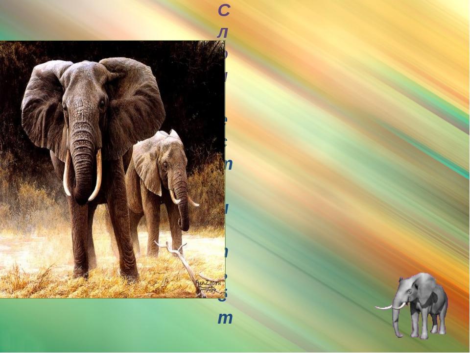 слон Слон ест и пьёт с помощью хобота. Добывая пищу, слон иногда пользуется...