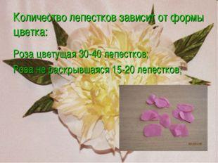 Количество лепестков зависит от формы цветка: Роза цветущая 30-40 лепестков;