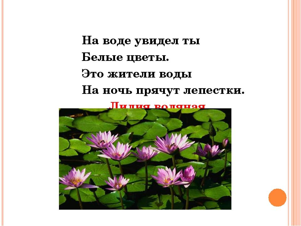 На воде увидел ты Белые цветы. Это жители воды На ночь прячут лепестки. Лили...