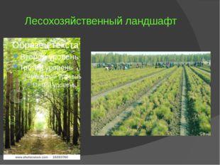 Лесохозяйственный ландшафт