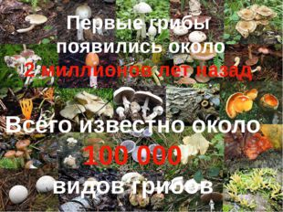 Всего известно около 100 000 видов грибов Первые грибы появились около 2 мил
