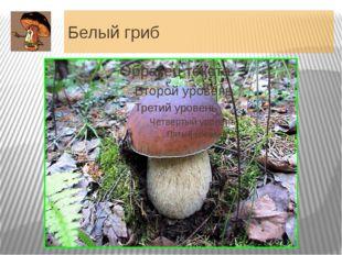 """Белый гриб Еще в XV - XVI вв. белый гриб называли именно """"грибом"""", у всех дру"""