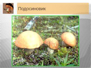Подосиновик Шляпка 5-25 см (до 30 см) в диаметре, полушаровидная, с плотно пр