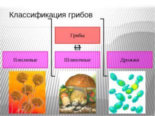 Классификация грибов Хорошо ли ты знаешь, что такое грибы? Тебя удивляет этот