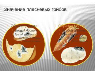 Значение плесневых грибов Плесневые грибы приносят большой вред человеку, пос