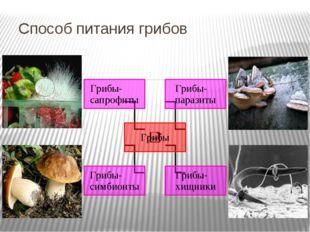 Способ питания грибов Пищеварение у грибов наружное – они выделяют ферменты,