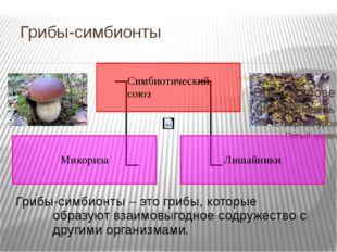 Грибы-симбионты Грибы-симбионты – это грибы, которые образуют взаимовыгодное