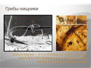 Грибы-хищники Грибы-хищники – это особая группа грибов, которые могут жить ка