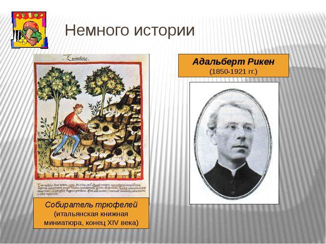 Немного истории Адальберт Рикен (1850-1921 гг.) Собиратель трюфелей (итальянс...