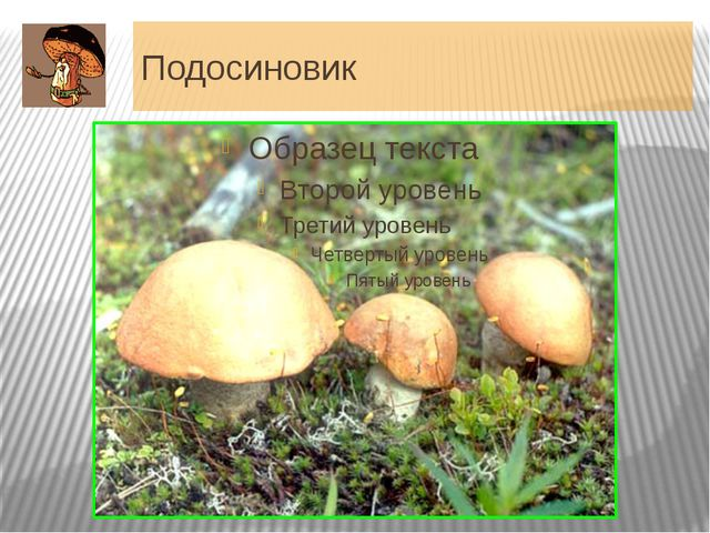 Подосиновик Шляпка 5-25 см (до 30 см) в диаметре, полушаровидная, с плотно пр...