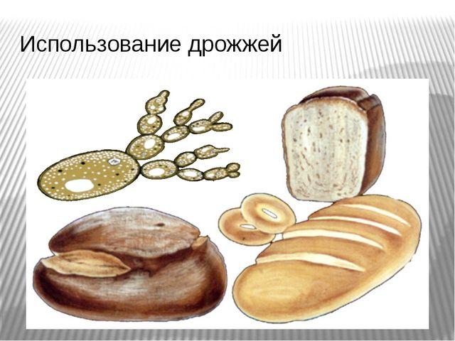 Использование дрожжей Дрожжи, как и все остальные грибы, питаются готовыми ор...