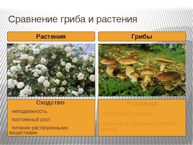 Сравнение гриба и растения Сходство: неподвижность, постоянный рост, питание...