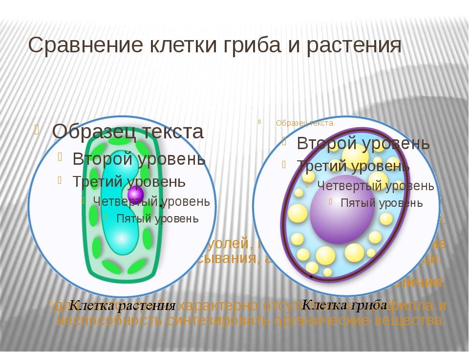 Сравнение клетки гриба и растения Сходство: наличие ядра, вакуолей, клеточной...