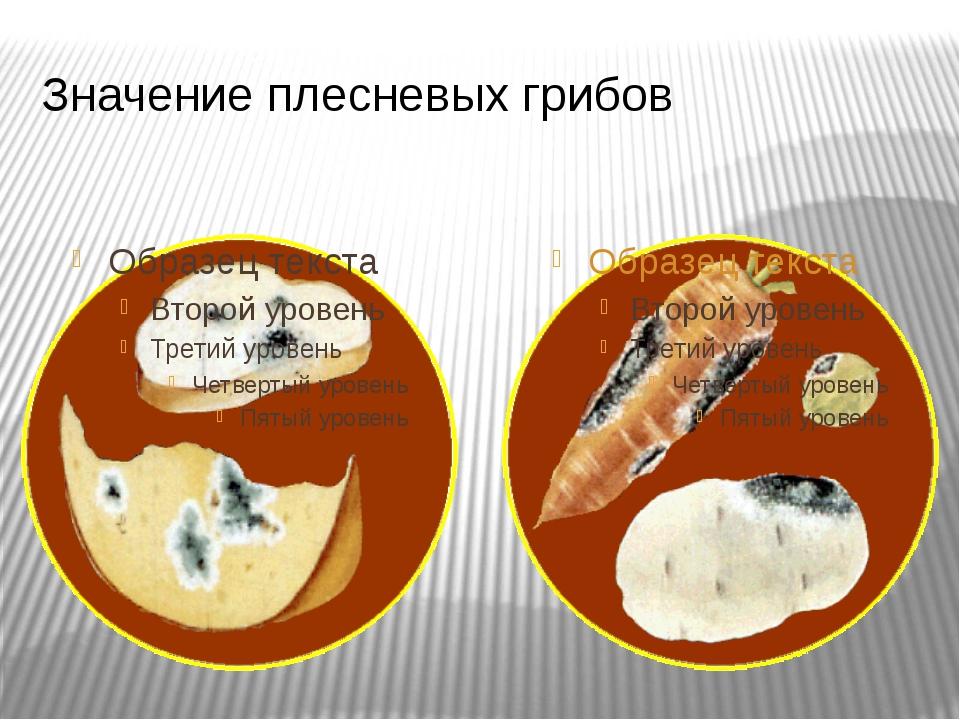 Значение плесневых грибов Плесневые грибы приносят большой вред человеку, пос...