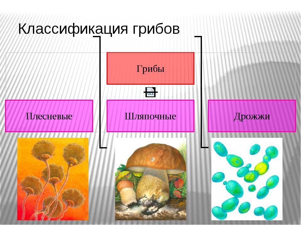 Классификация грибов Хорошо ли ты знаешь, что такое грибы? Тебя удивляет этот...