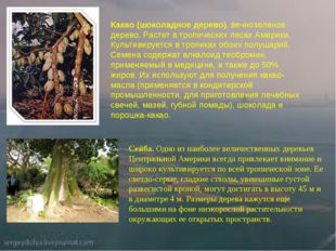 Какао (шоколадное дерево), вечнозеленое дерево. Растет в тропических лесах Ам
