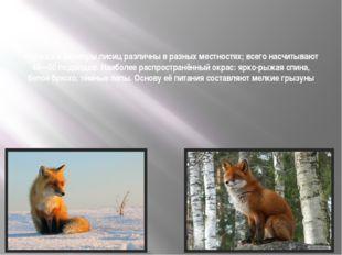 Окраска и размеры лисиц различны в разных местностях; всего насчитывают 40—5