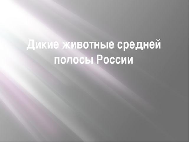 Дикие животные средней полосы России