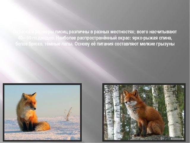 Окраска и размеры лисиц различны в разных местностях; всего насчитывают 40—5...