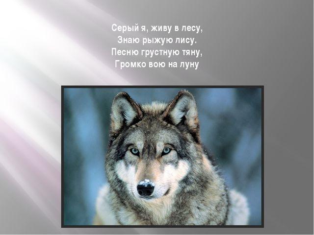 Серый я, живу в лесу, Знаю рыжую лису. Песню грустную тяну, Громко вою на луну