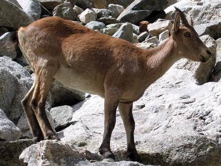 http://animals-wild.ru/uploads/1381238375_dzhejran2.jpeg