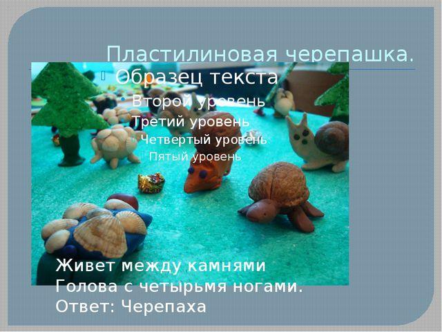 Пластилиновая черепашка. Живет между камнями Голова с четырьмя ногами. Ответ:...