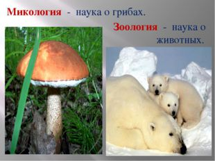 Микология - наука о грибах. Зоология - наука о животных.