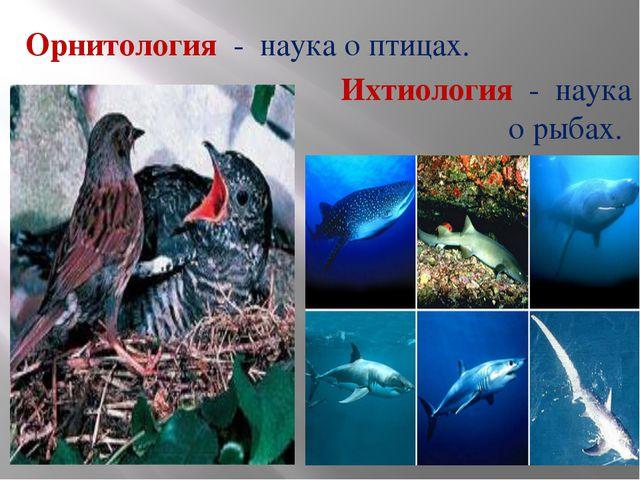 Орнитология - наука о птицах. Ихтиология - наука о рыбах.