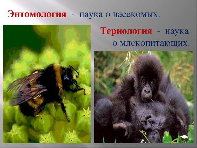 Энтомология - наука о насекомых. Териология - наука о млекопитающих.
