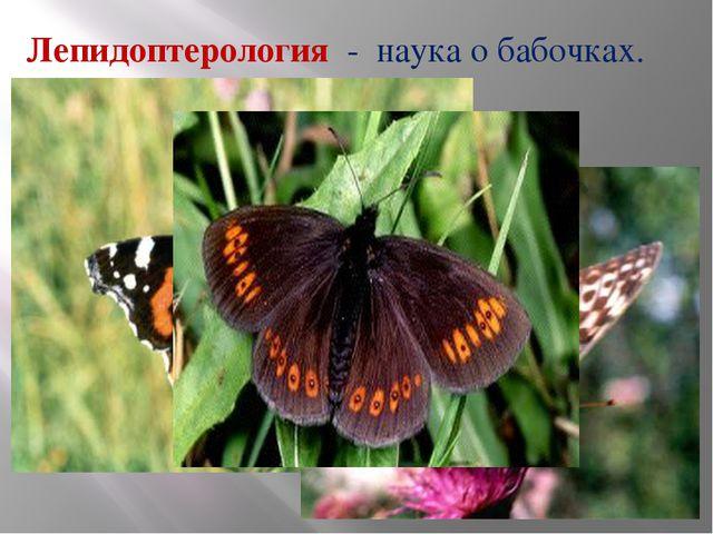 Лепидоптерология - наука о бабочках.